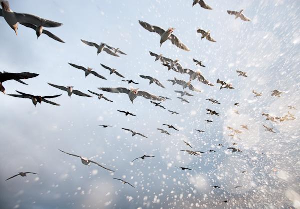 salt_birds.jpg