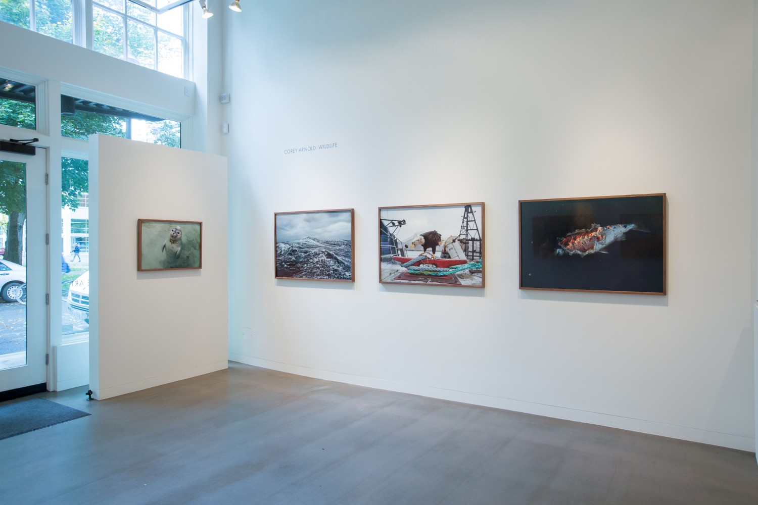 Wildlife exhibition at Charles Hartman Fine Art. Photographs by Corey Arnold