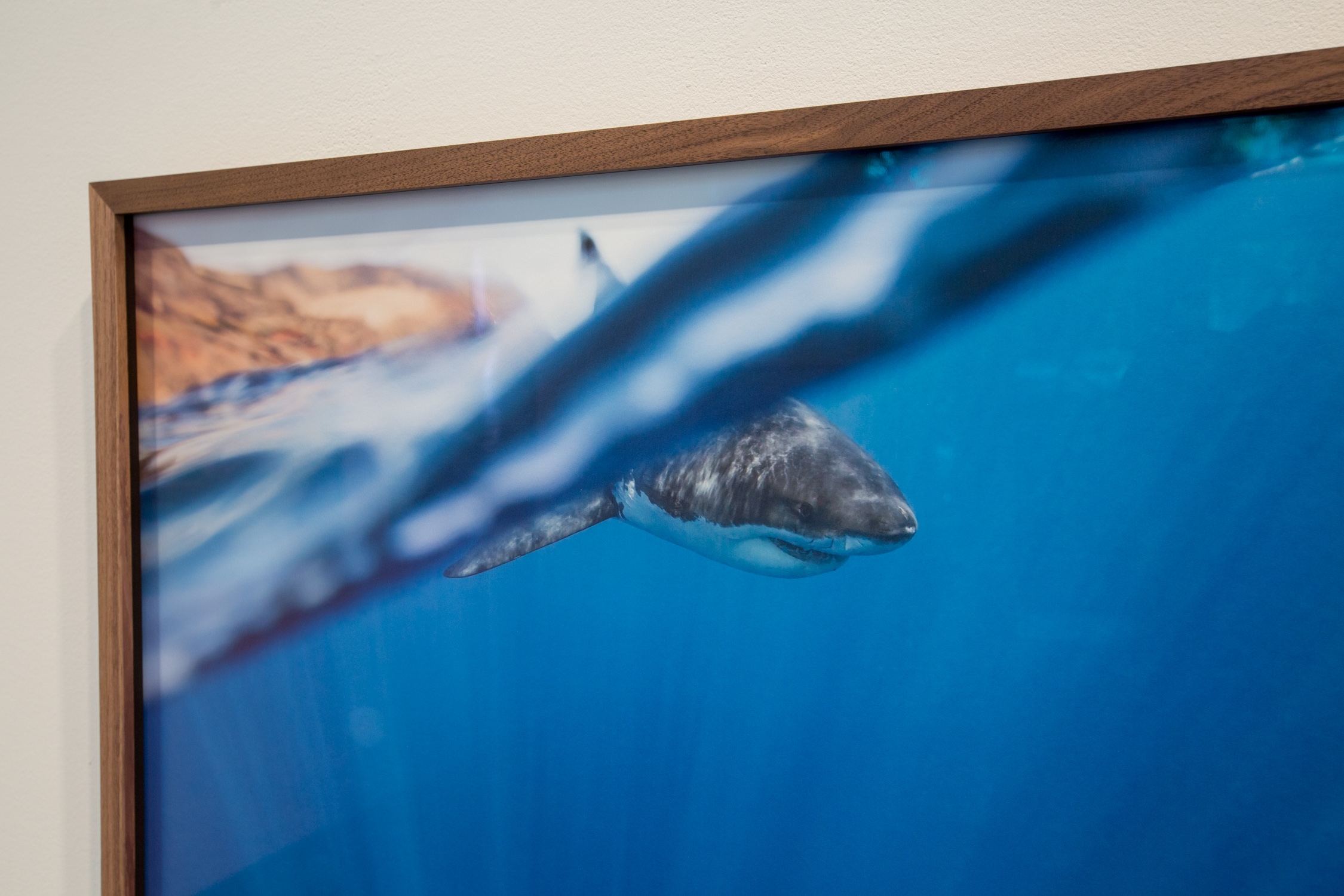 Wildlife at Charles Hartman Fine Art. photos: Corey Arnold.