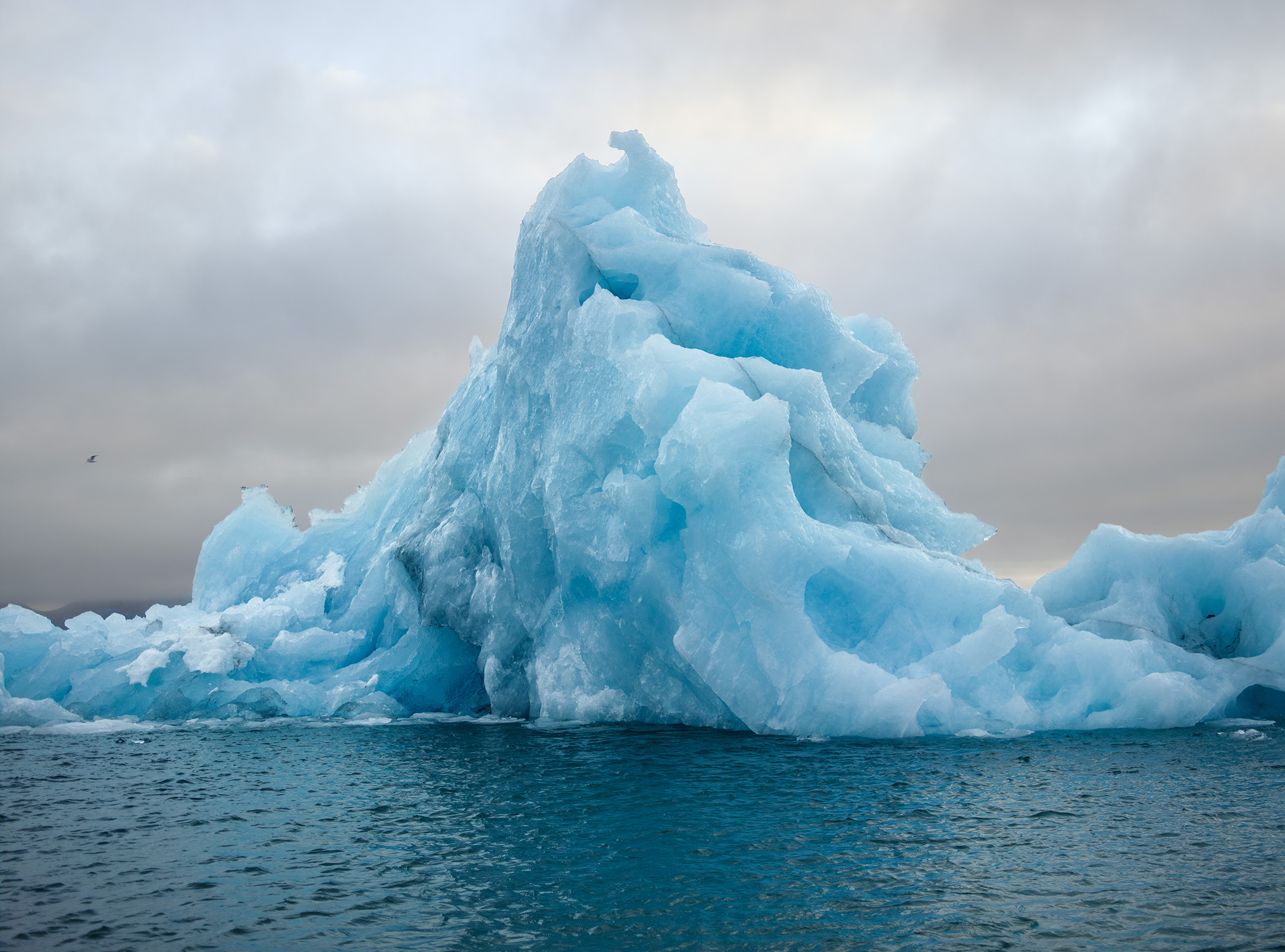 arnold, corey arnold, adventure, arctic, art, climate change, discovery, exhibition, Charles Hartman fine art, hornsund, gallery, glacier, norway, ocean, photographer, photography, project pressure, sea, Svalbard, water, wildlife